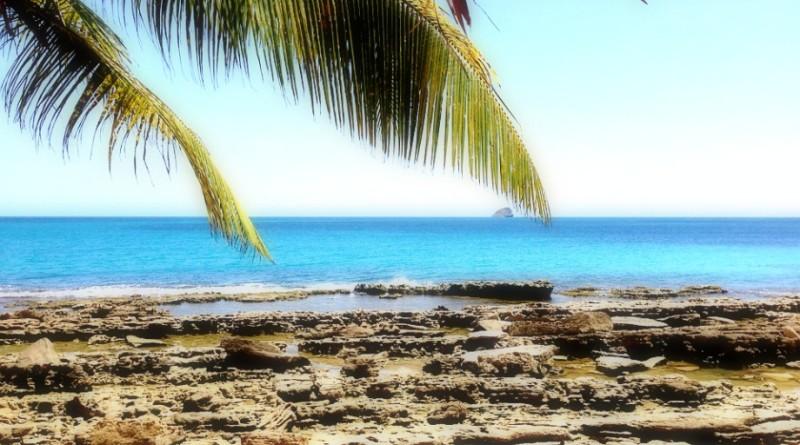 palmier-ile-paradisiaque